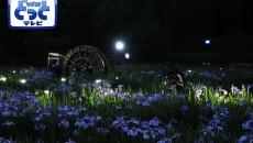 ほたるの里「菖蒲園ライトアップ」